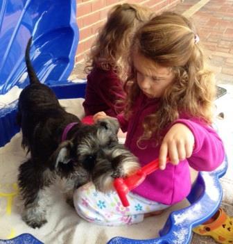 dog breeding information