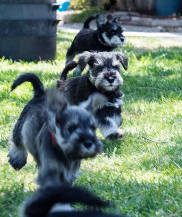 new puppy shots