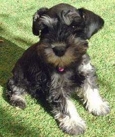 puppy personality quiz