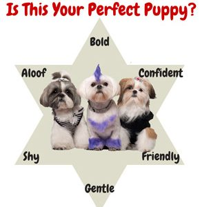 puppy personality test