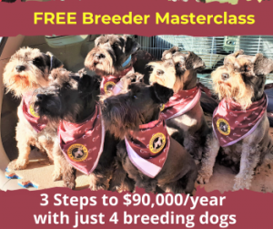 dog-breeding-business